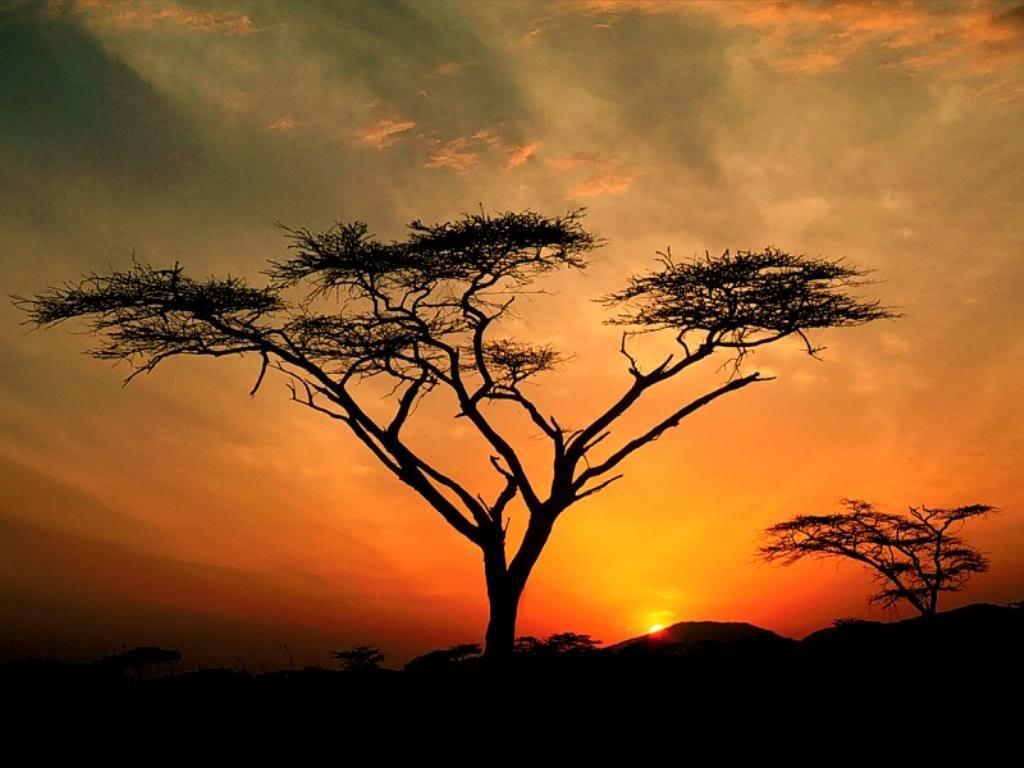 4 Night safari