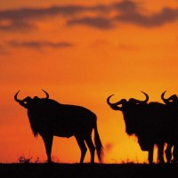 SOUTH AFRICA SAFARI PACKAGE 7 DAY KWAZULU NATAL WITH HERITAGE TOURS AND SAFARIS