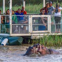 shoreline hippo & croc boat trips