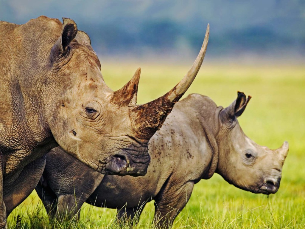 Full Day Safari Tours