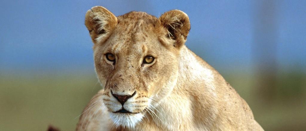 2 Night hluhluwe kwazulu natal safari