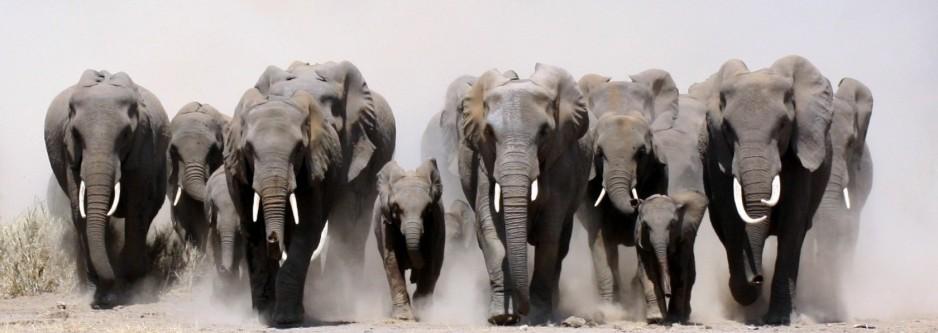 4 Night Zululand Safari