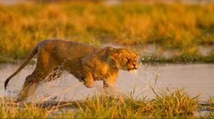 Isimangaliso Wetland Park Wins Accolades