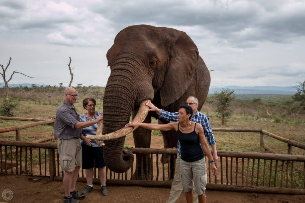 Elephant and cheetah interaction tour