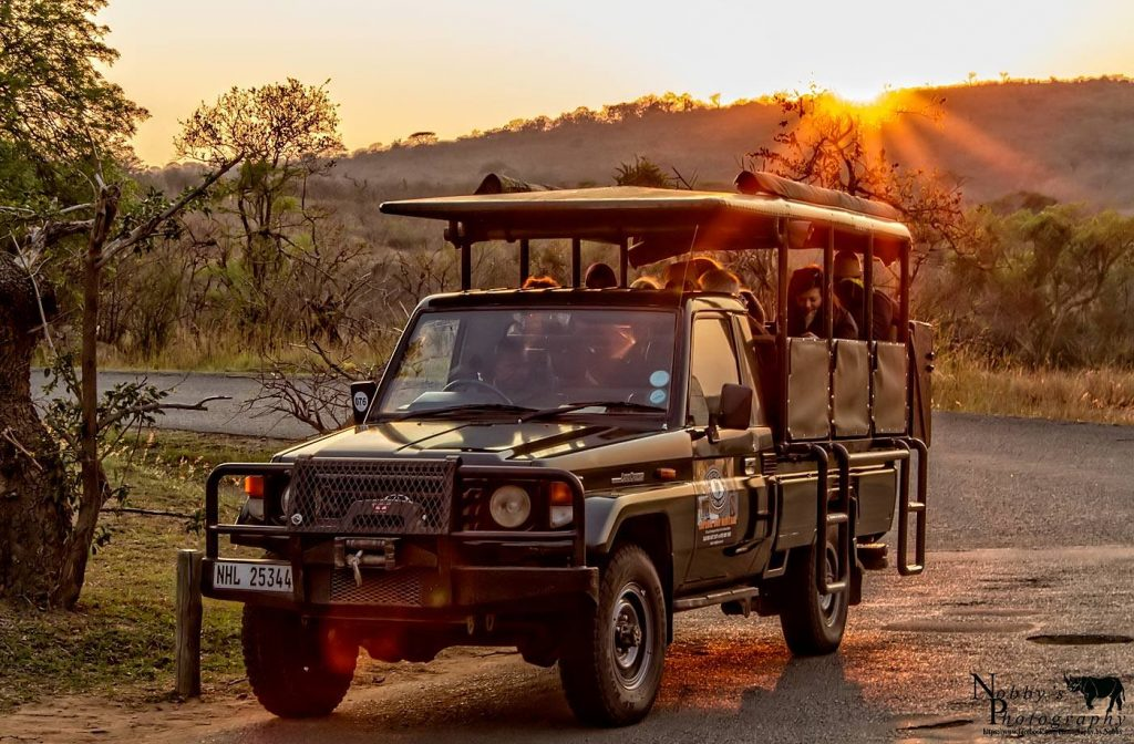 Night Drive Safari Heritage Tours And Safaris