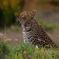 heritage tours & safaris in isimangaliso