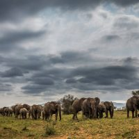 jonathan elephants