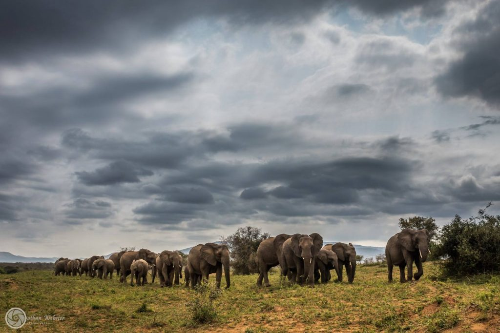 3 night 4 day zululand safari package south africa