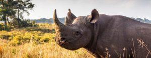 isimangaliso tours and safaris
