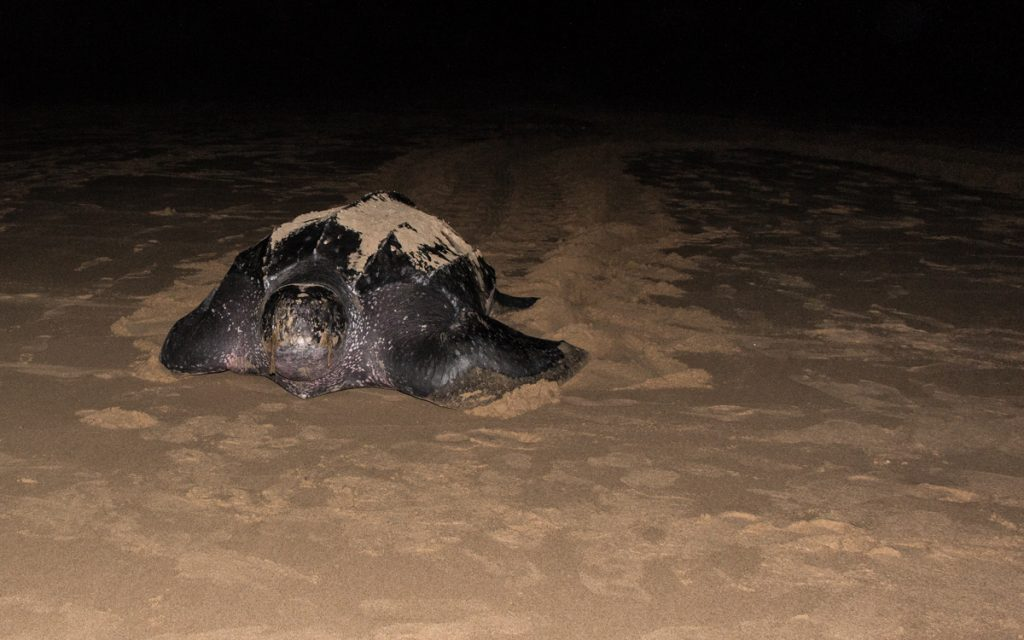 isimangaliso wetland park turtle sightings