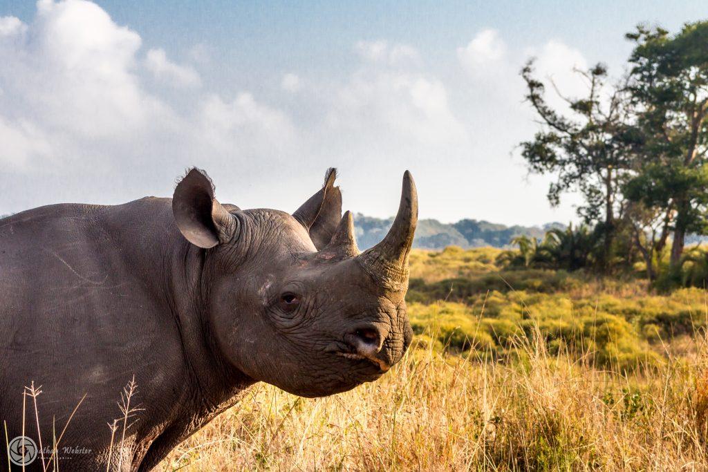 Heritage Tours & Safaris South Africa