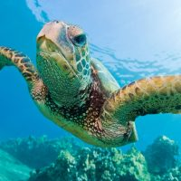 loggerhead sea turtle tours