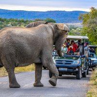 day safari hluhluwe-imfolozi park