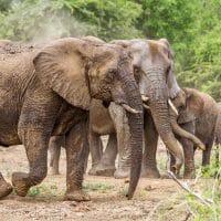 african wildlife vets