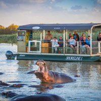 hippo yawning next to shoreline hippo & croc boat cruises