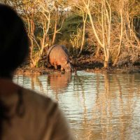 clients watching hippo st lucia estaury