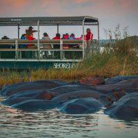 st lucia hippo safari tours