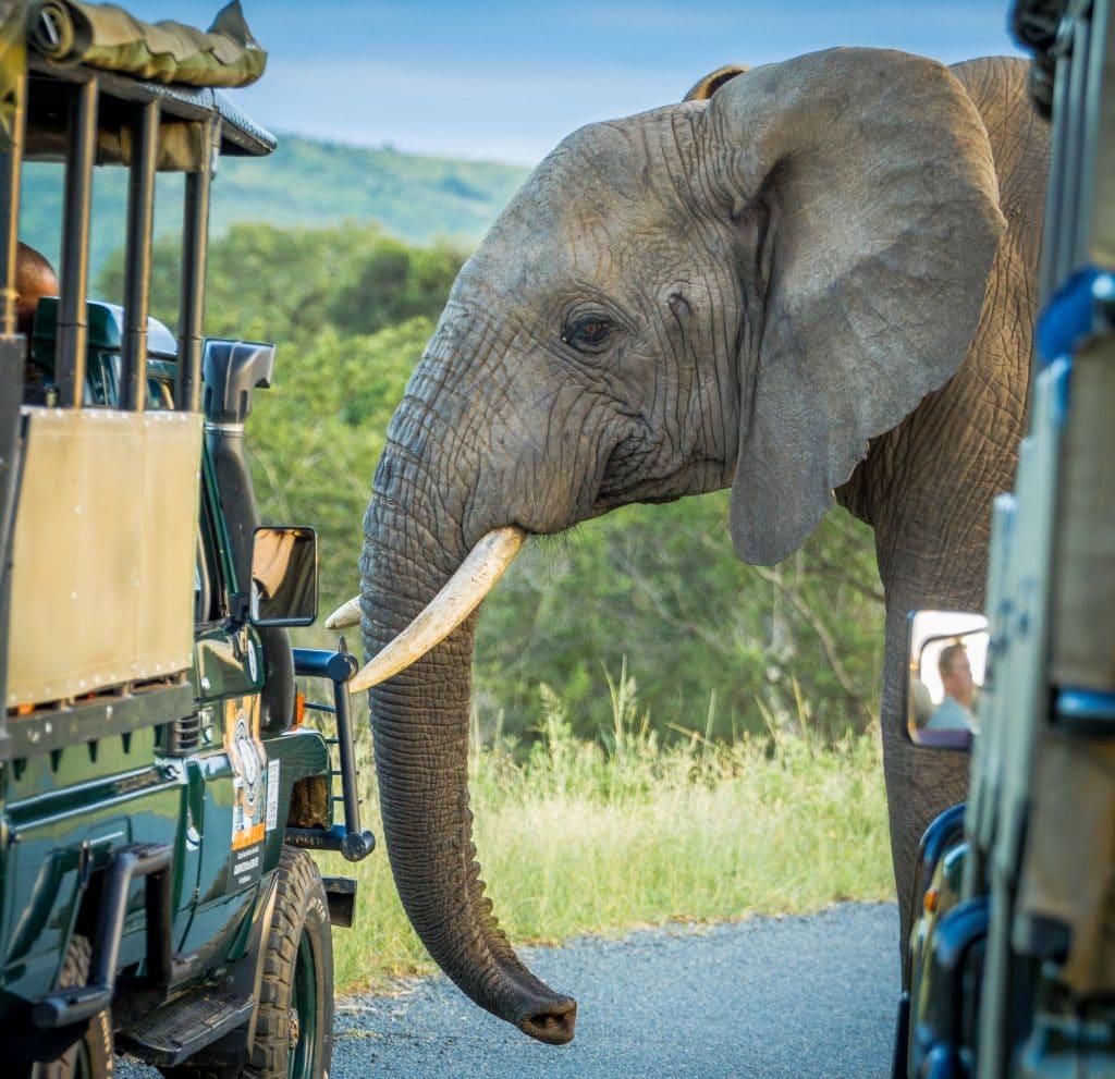 full day big 5 safari hluhluwe -imfolozi park