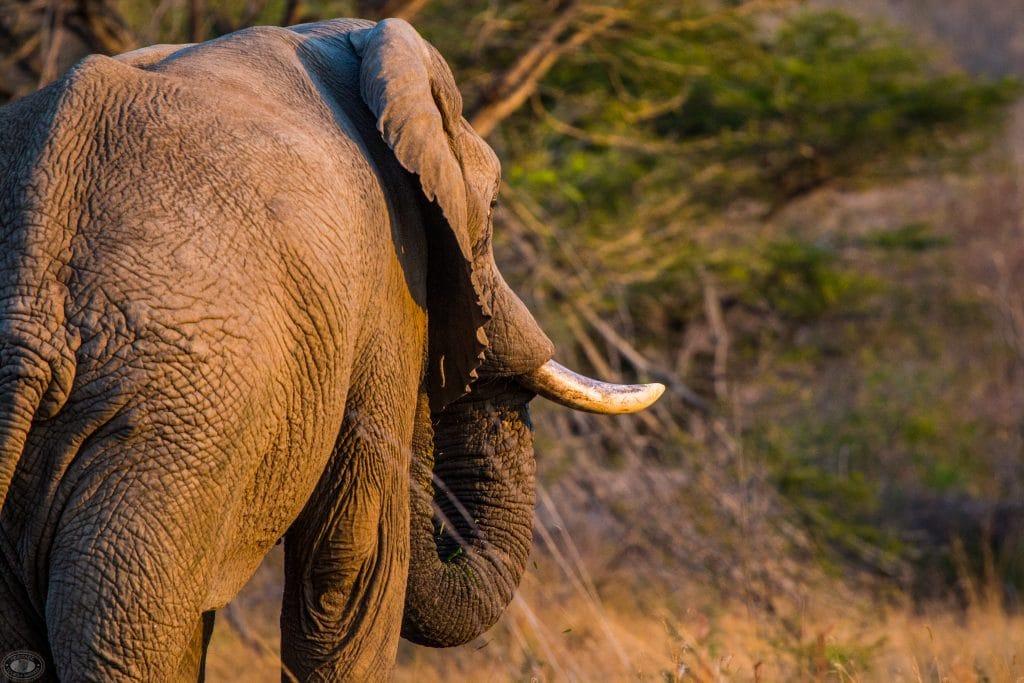 st lucia sunrise elephant sighting